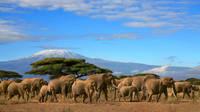Gdje se nalazi Tanzanija? Zemlja Opstanka, zemlja Serengetija, lavova, slonova i Kilimandžara