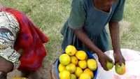 Djeca prodaju Mango u Tanzaniji, okolo rudnika zlata u Geiti, na putu do Mwanze